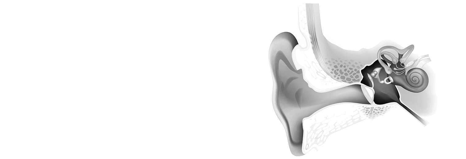 A diagram of the ear.