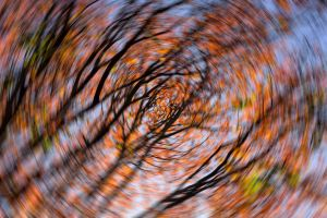 A blurry tree, to demonstrate what dizziness looks like.