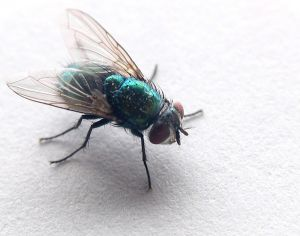 flies inspire technology
