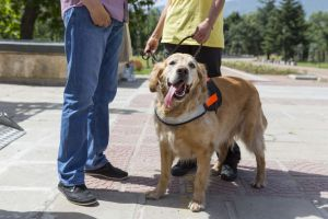 hearing assistance dog out in public