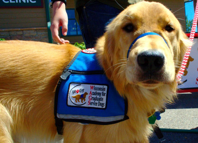 Know The Rules Service Animals And Traveling