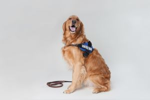 Service animals help individuals with hearing loss.